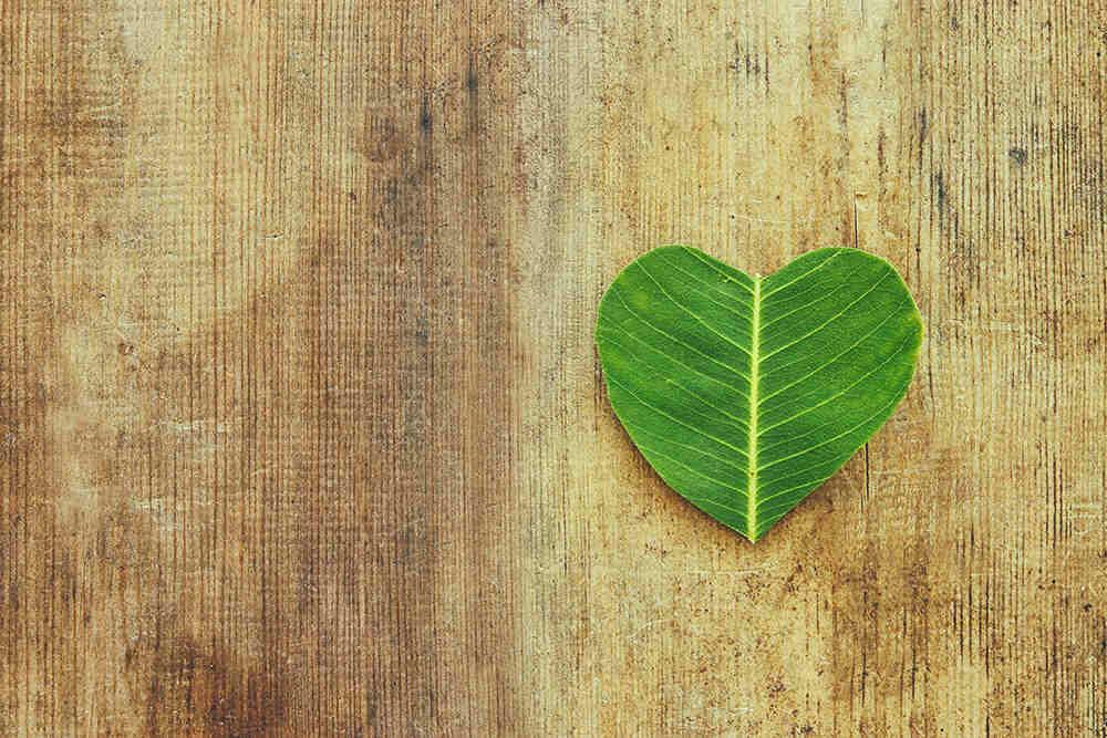 list-u-obliku-srca-koji-simbolizira-ljubav-prema-okolisu
